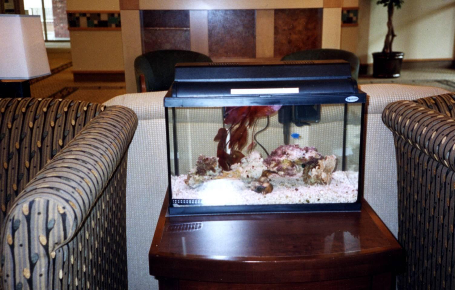 the Okeefe's 10 gallon salt water tank